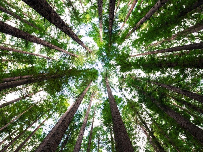 De kracht van bosbaden